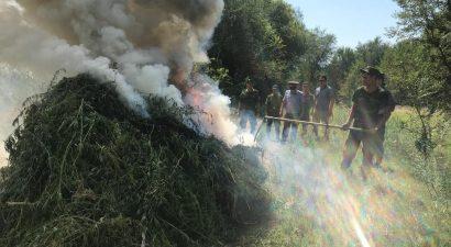«Зеленые фуражки» ликвидировали порядка 5 тонн марихуаны, предав их огню.