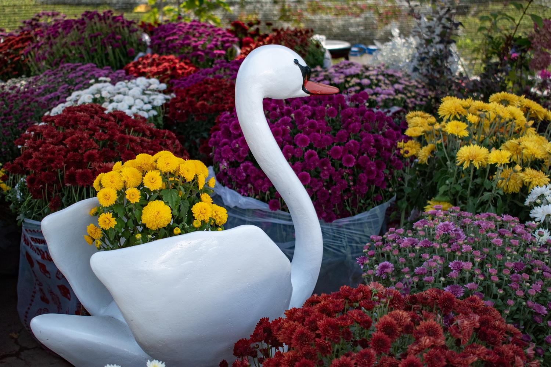 Потому что гладиолус! В Бишкеке флористы замутили сразу две выставки-распродажи…
