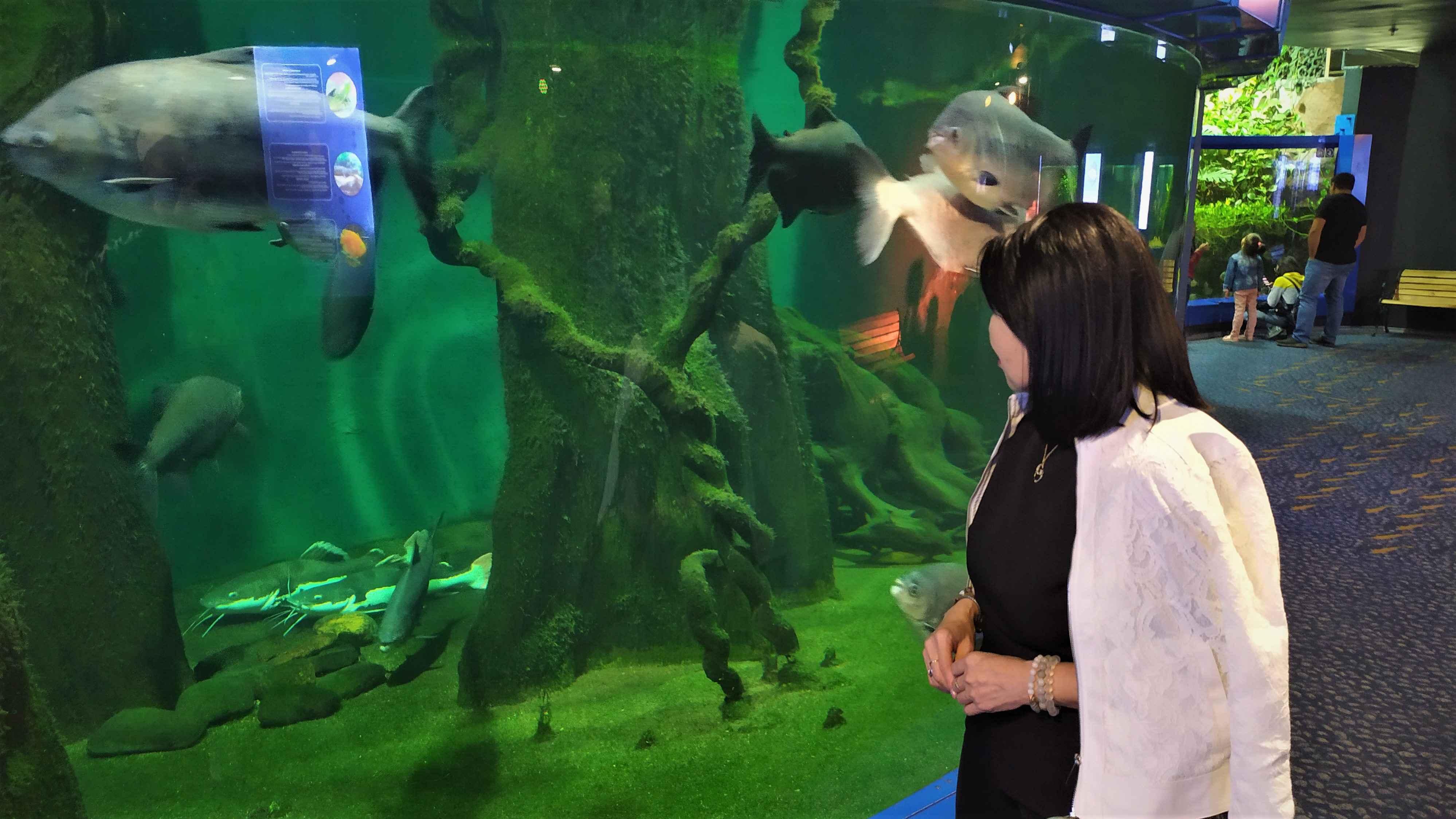 Центр Ailand включает аквапарк, бассейны, SPA-салоны, фуд-корт, театр аниматрониксов «Джунгли», где бродят динозавры…