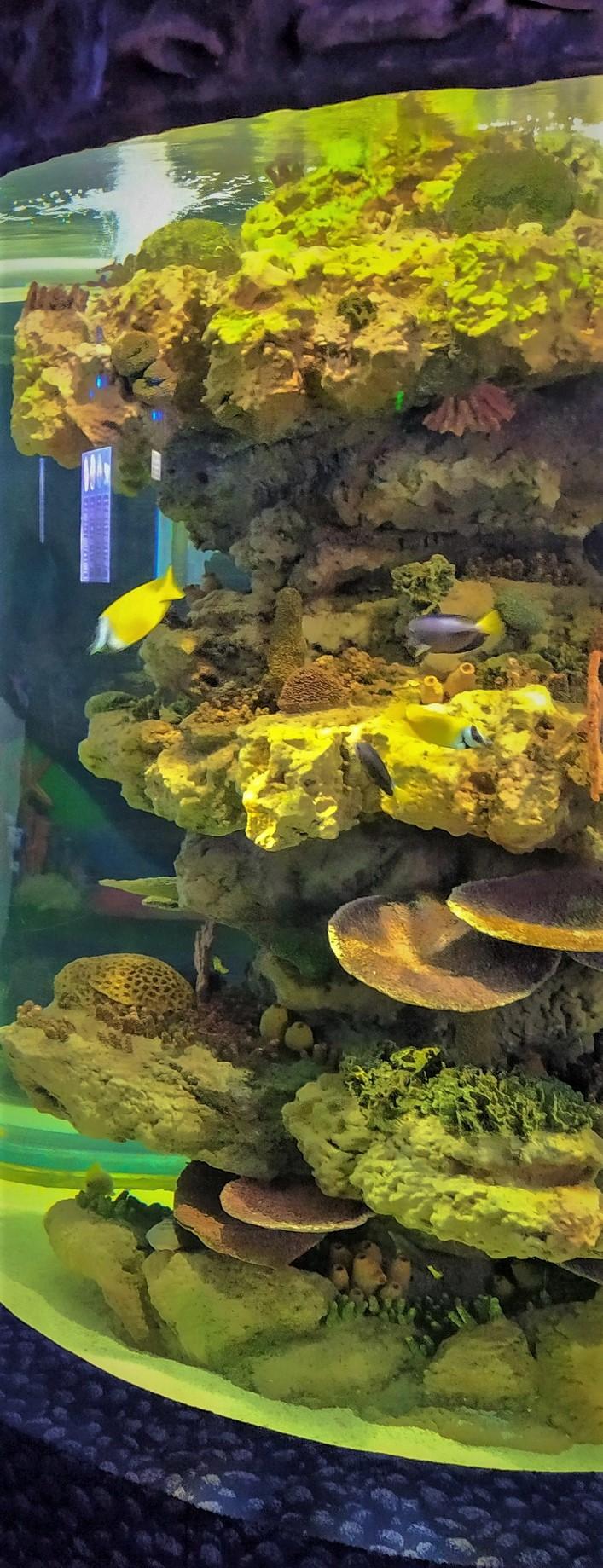 ЦСО Ailand особо знаменит своим океанариумом, единственным в мире, удаленным от океана более чем на 3000 км! Здесь даже акулы плавают…