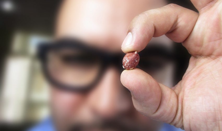 Может, безобидный арахис просто стал предметом политических торгов?