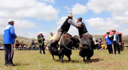 В Кыргызстане зарезали около 40 тысяч «тянь-шанских бизонов». Сможем ли мы восстановить их популяцию? Часть 1