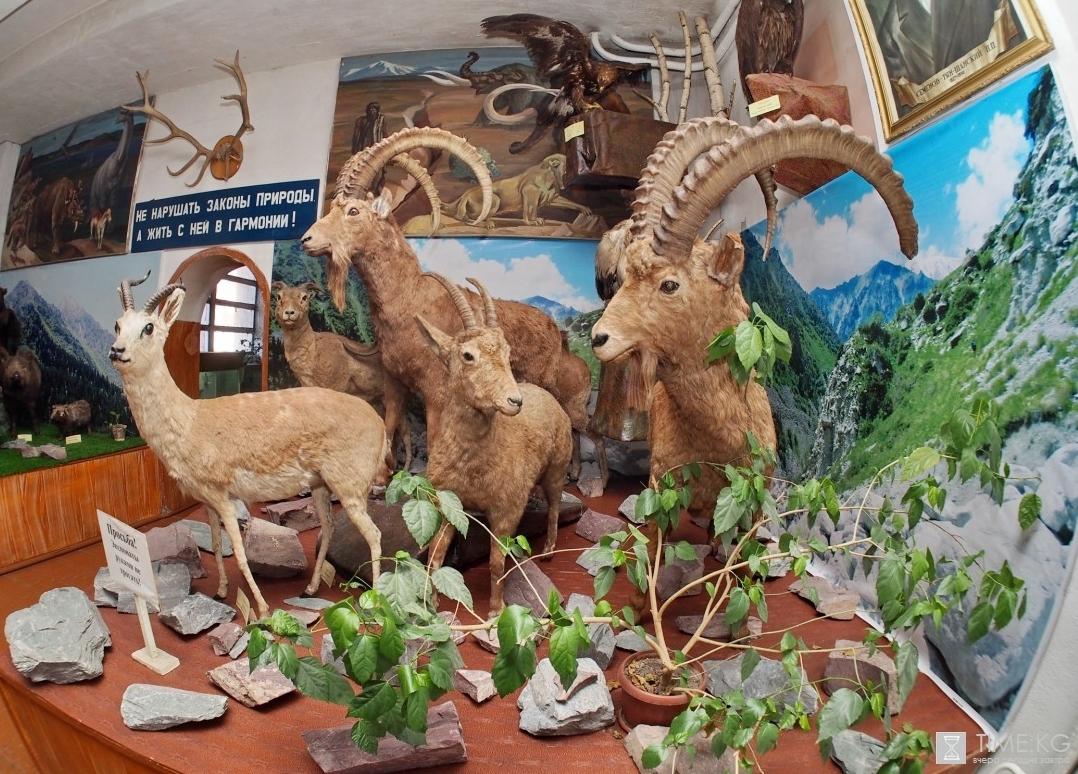 Чучела особого значения. Где в Бишкеке можно увидеть все великолепие природы Кыргызстана?