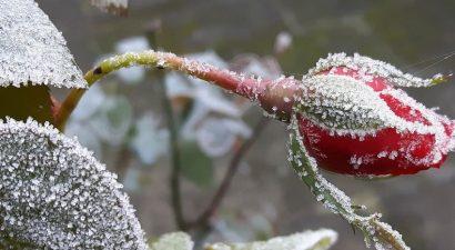 В конце недели в Бишкеке ожидается первый снег